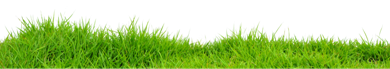 data/grass_PNG4937-1500x265.png